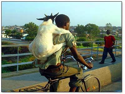 mutton-transport